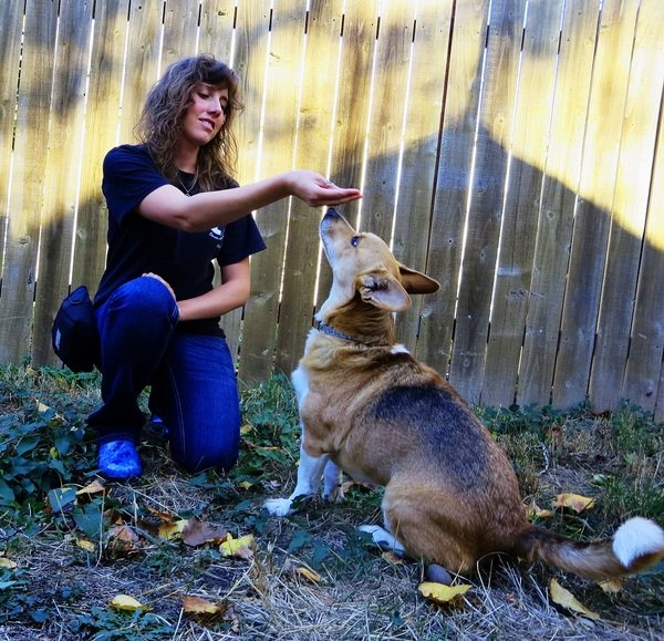 Certified Positive Reinforcement Training- Silver Spring, MD