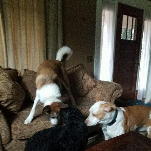 Doggone U Dog Training - Gold Bar, WA