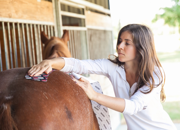 Holistic Equine Therapy - Houston TX