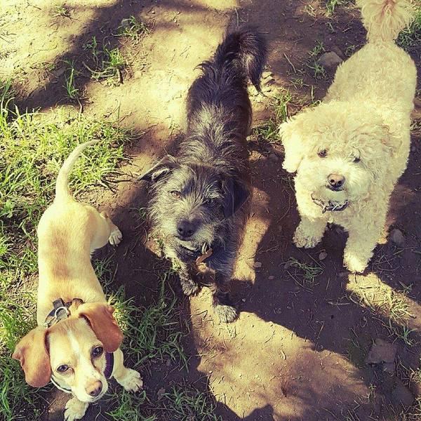 Doggiewalks