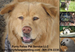 Furry Fellas Pet Service - Rhode Island & Massachusetts