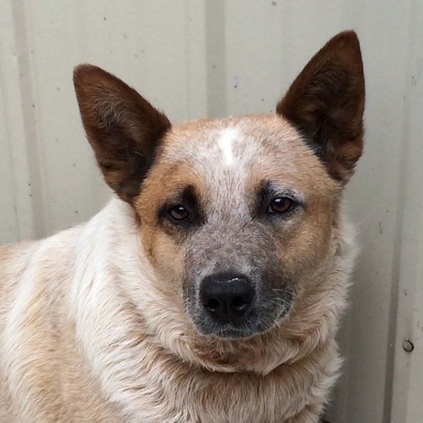 Canine & Feline Boarding  - Remus, MI