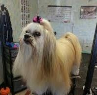 Johanna's professional pet grooming  - Lakewood, CO