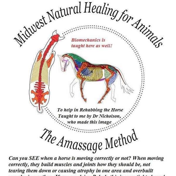 JMSHOW EQUINE AND CANINE MASSAGE THERAPY  - Bethesda, OH