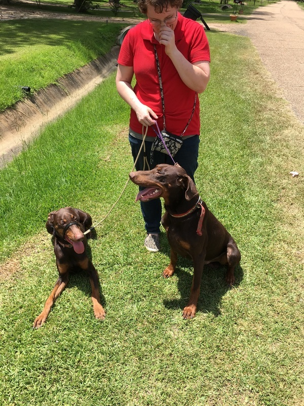 Marlina the Mobile Dog Trainer - Brandon, MS