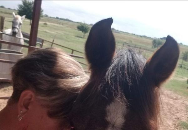 Animal Intuitive & Pet Reiki Practitioner  Oklahoma City, OK