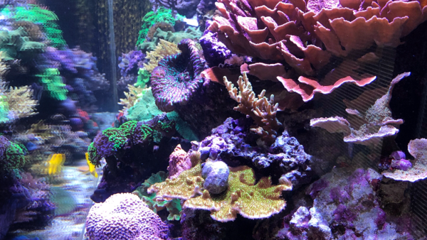 Aquarium Installation & Maintenance