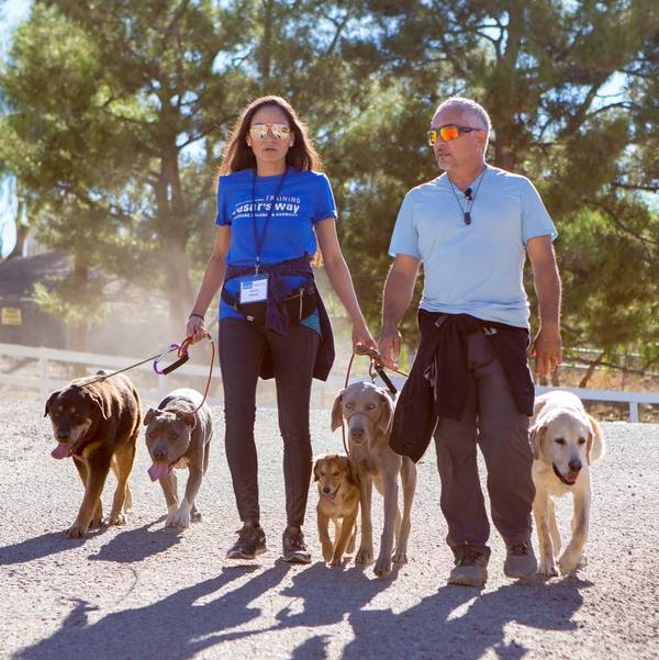Pack In Harmony Dog Training & Behavior- - Westminster, CO
