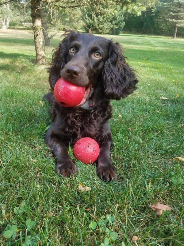 Professional Pet Sitting Services - Waukesha, WI