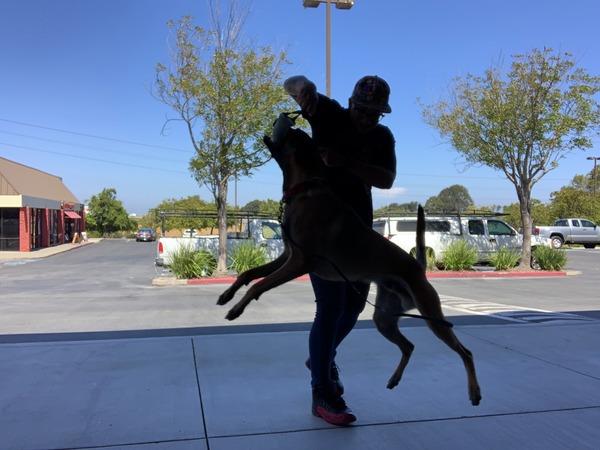 Canine Centric  - San Pablo, CA