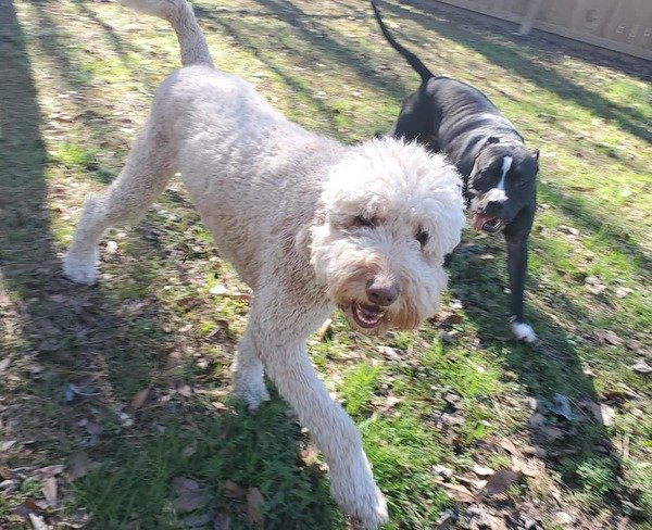 Dog Trainer The Lucky Pet - Denham Springs, LA