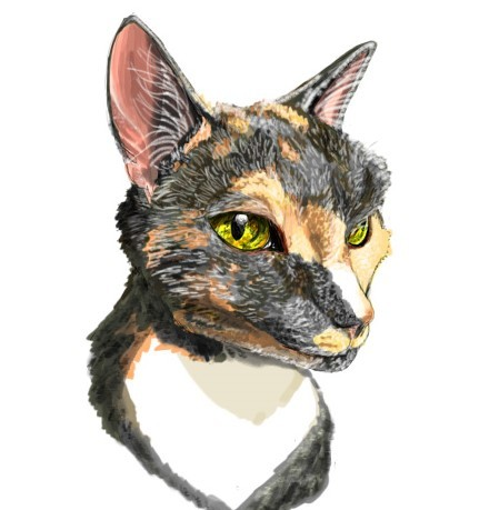 Show Off your Fantastic Fur-Babies With a Purrfect Portrait! - Lake Worth, FL