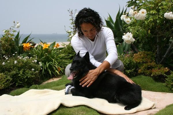 Animal Healer / Reiki - Albuquerque, NM