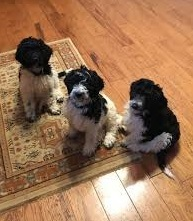 Focused choice dog training  llc