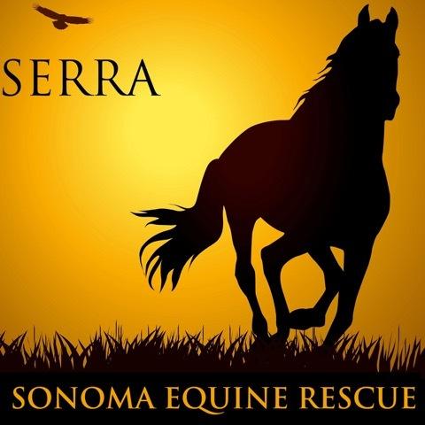 Sonoma Equine Rescue, Rehab & Adoption- Santa Rosa, CA