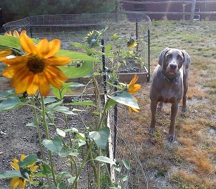 Angie's pet care   profile