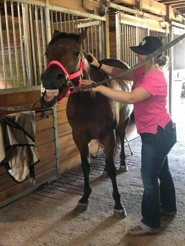 Top Hand Equine Sports Massage, LLC - Monroe, PA
