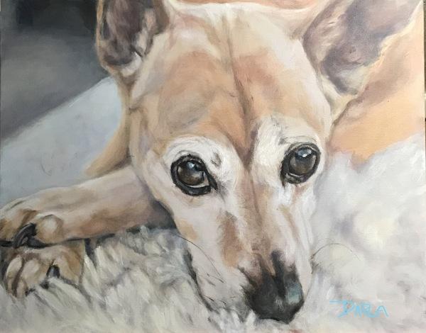 Pet Portraits by Darla - Dixon, MO