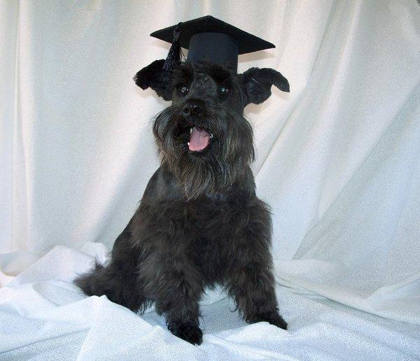 Smart Dogs Training Academy Inc. - Los Angeles, CA