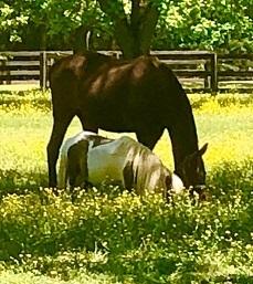 Spotted Fawn Farm - Hartwell, GA