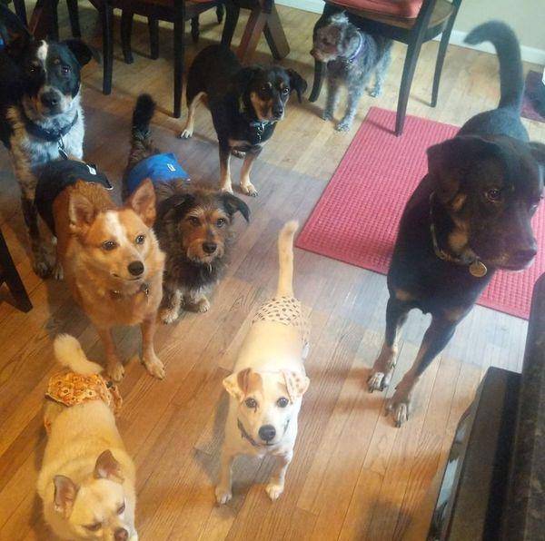 Jessie's Dogs - Sewell, NJ