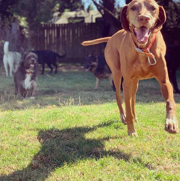 Dogwood Ranch Pet Resort - Salinas, CA