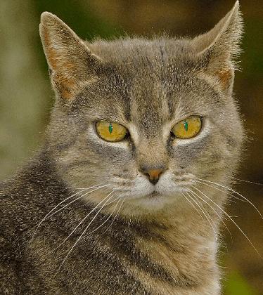 Animal photography  - Damariscotta, ME