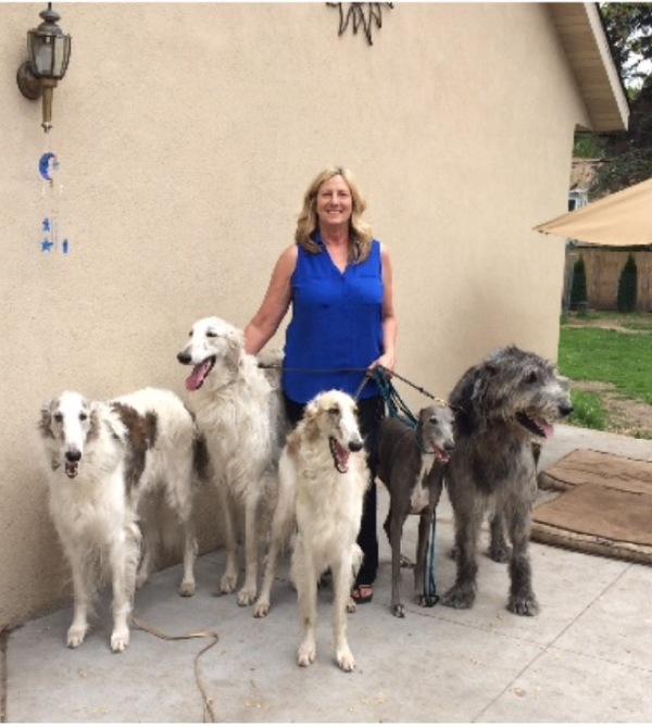 Rita and dogs ii