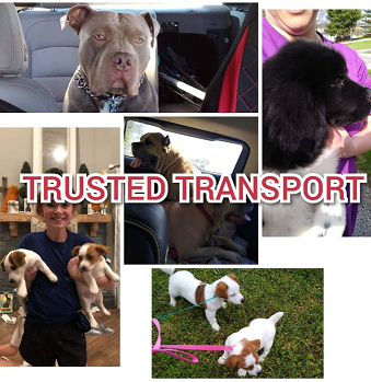 Trusted Transport - Cleveland, OH