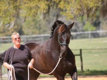 Wholistic Veterinary Care - Brooksville, FL