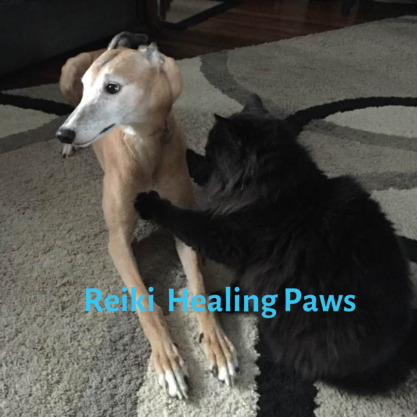 Northwest Animal Healing - Sandpoint, ID
