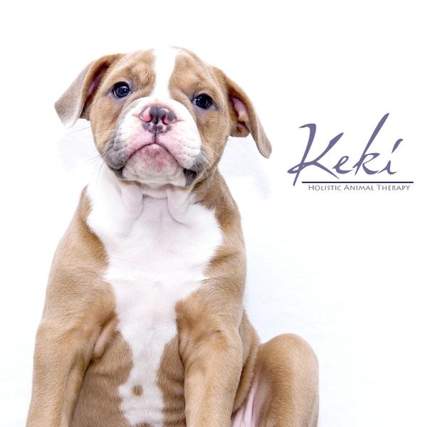 Keki Holistic Animal Therapy  - Charleston, SC