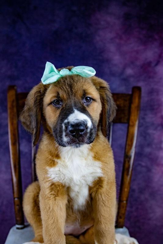 Custom Pet Photography Sessions - Fayetteville, GA