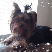 Lauri's Pet Sitting Service  - Tulsa, OK