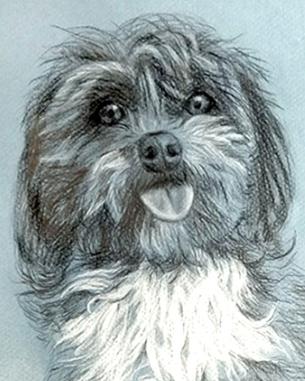 PET-ART-PORTRAIT.COM