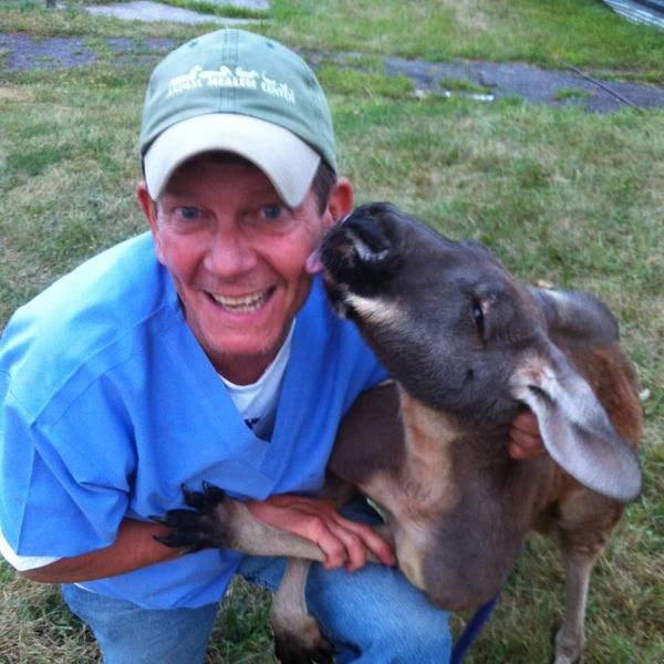 Animal Health Center, 488 East Main St. - Middletown, NY