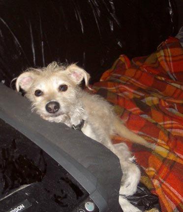 Yvette's Small Pet Care - New York, NY