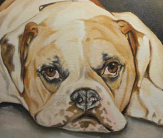 Pet portraits by Sue - Oaklandon, IN