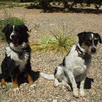 Lucky Dawg Daycare - Santa Fe, NM
