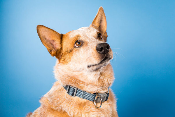 Justin Roskowske Pet Portrait Photographer, Saint Louis, MO