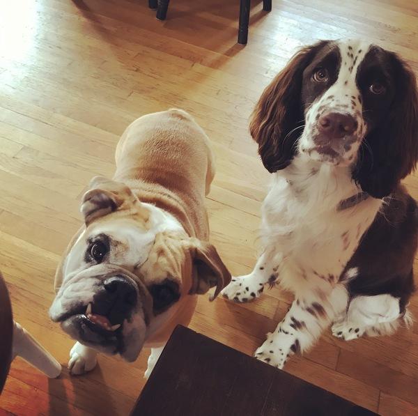 Dog Walks & Potty Breaks - Kingston, MA