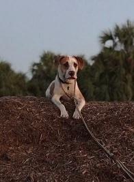 Space Coast Dog Trainer - Merritt Island, FL
