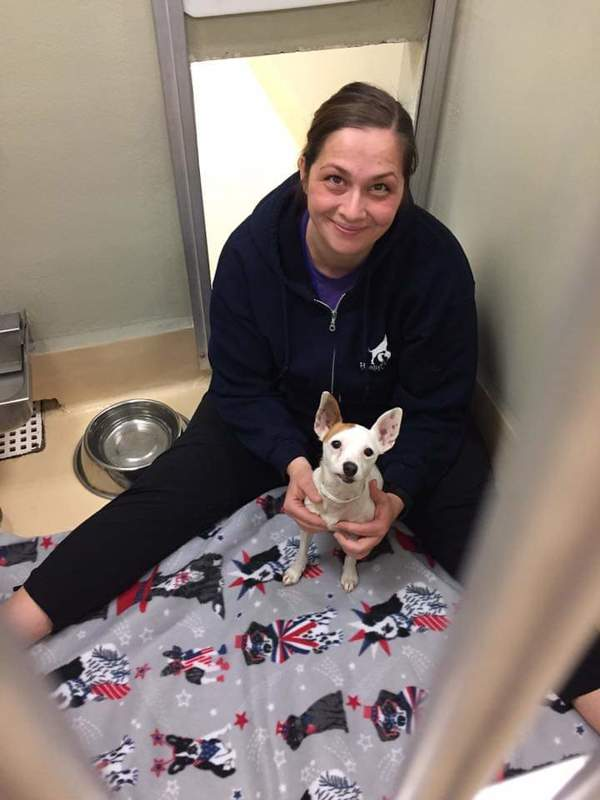 Revive Animal Massage - Beaverton, OR