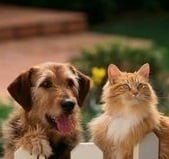 Happy Pet Care Services - San Francisco, CA