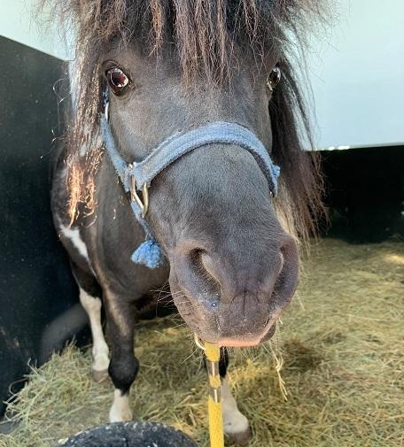 Equine Transportion - Cielo Farms - Mason, MI