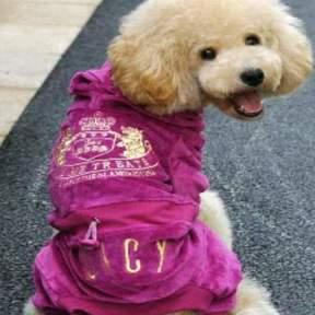 Grand Paws Doggie Care